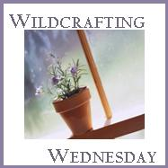 WildcraftingWeds-Button